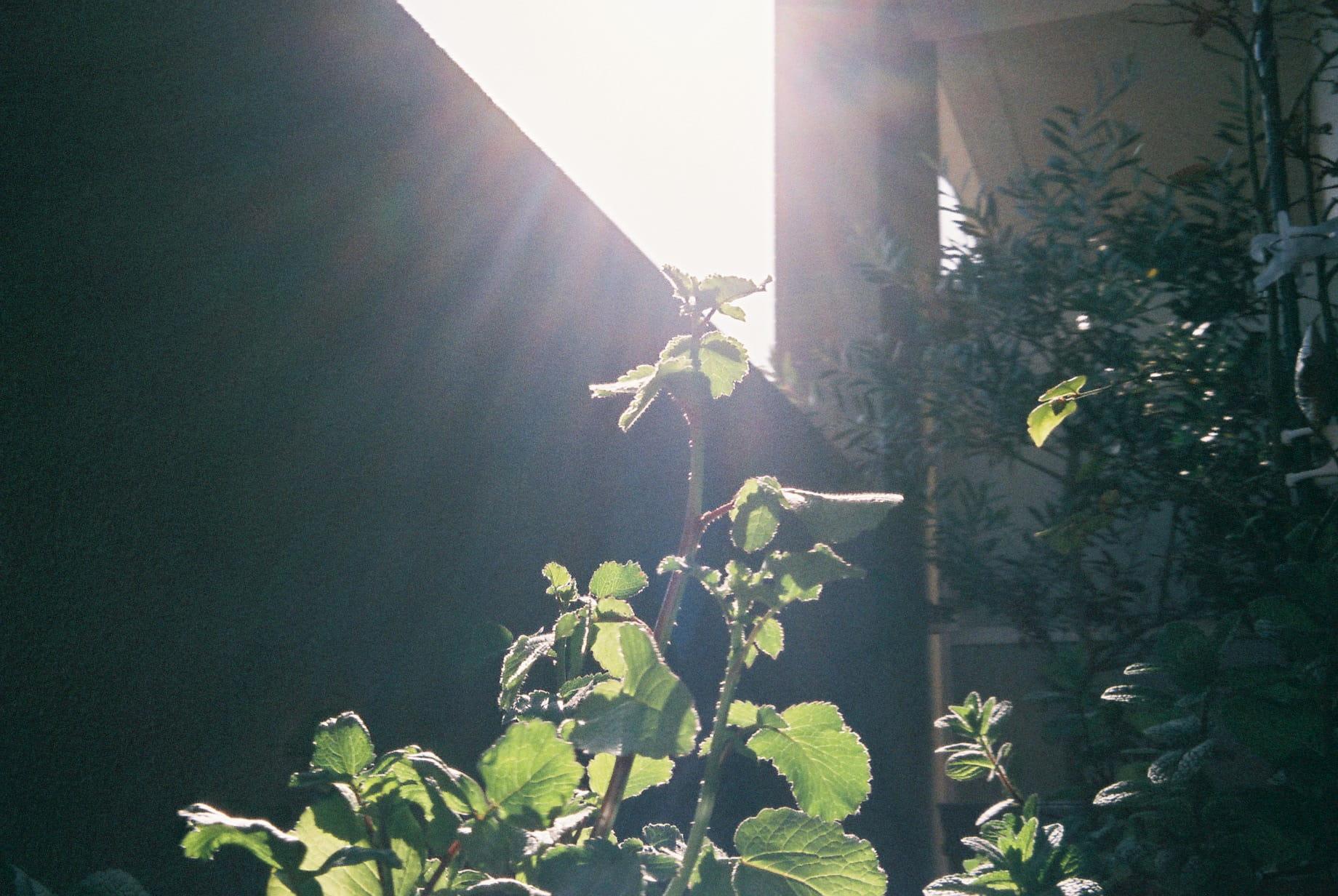 35mmフィルムカメラ | 作例2